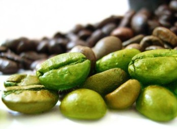 extract-of-green-coffee-beans